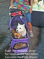 Dogs shop too
